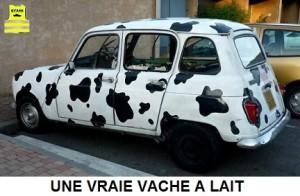 vache à lait rva